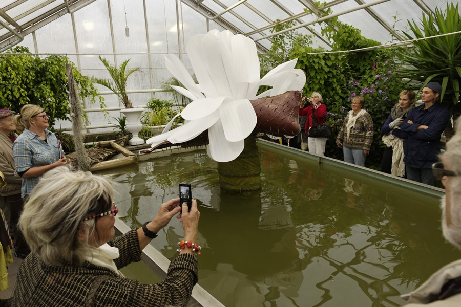 2012-ingela-ihrman-the-giant-water-lily-victoria-amazonica-bloom