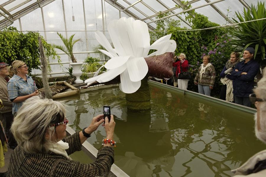 2012-ingela-ihrman-the-giant-water-lily-victoria-amazonica-bloom