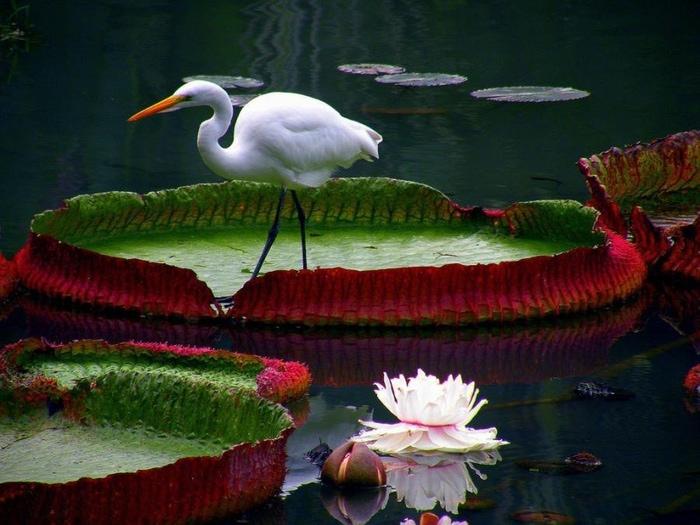 ptica-na-kuvshinke