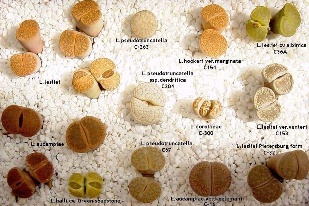 zhivye-kamni-raznye