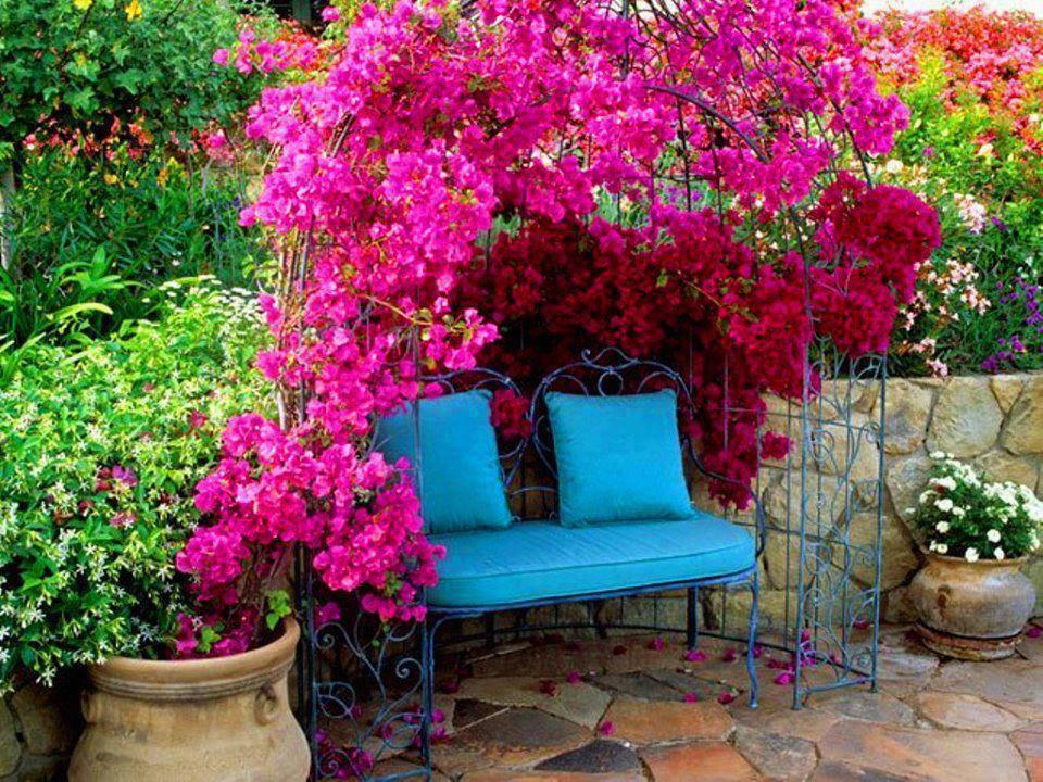 Цветы для беседки