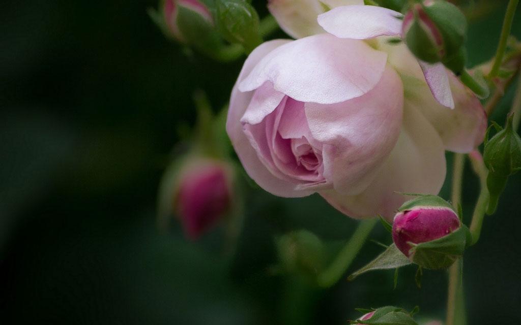 Фото цветов для вконтакте