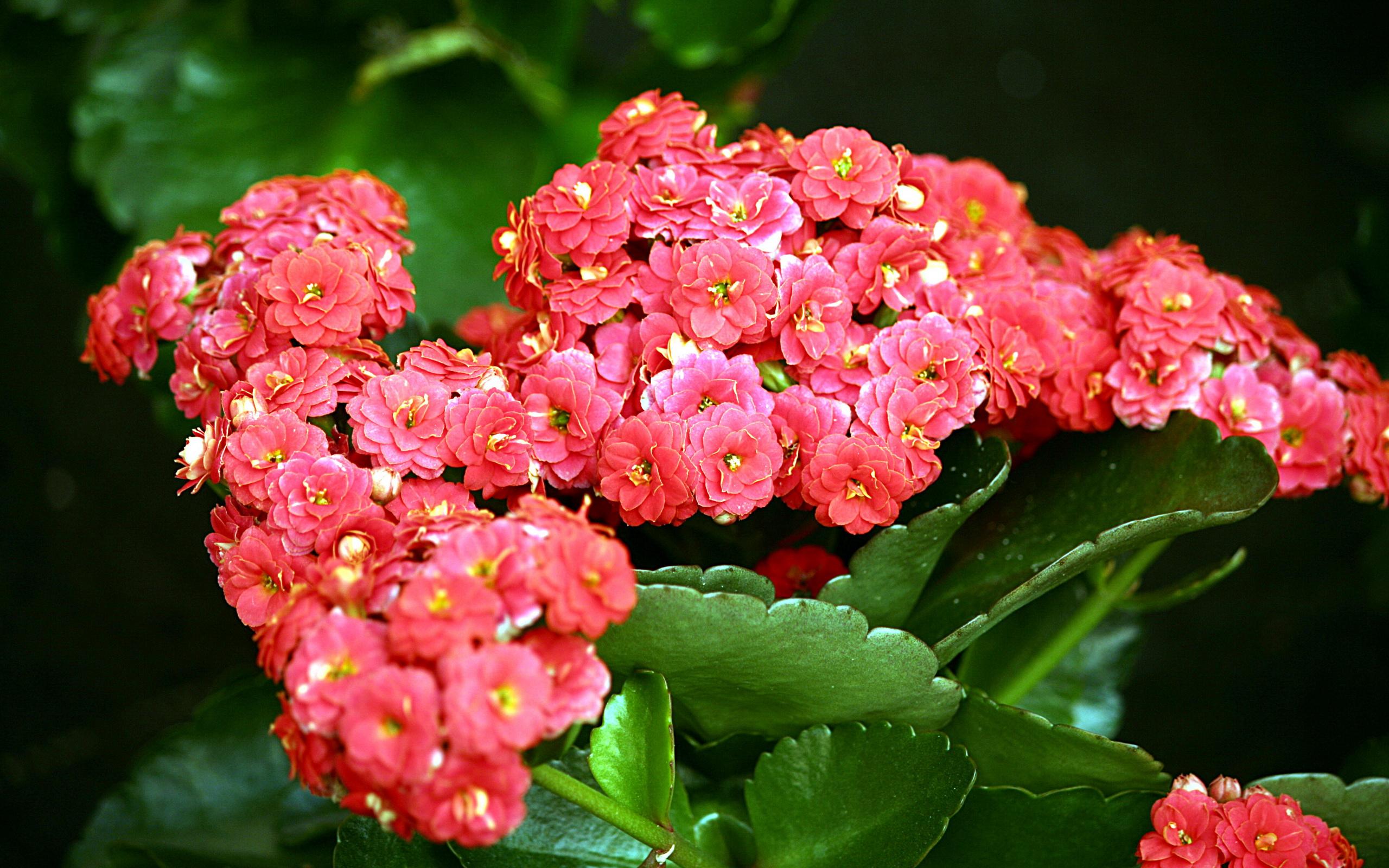 Цветок живородящий
