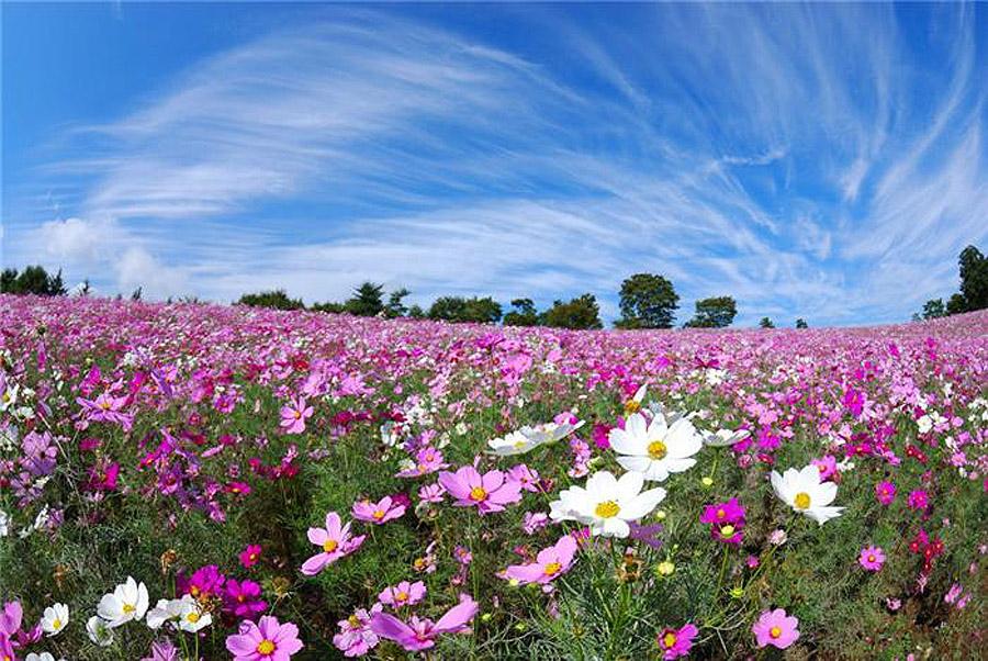 Фото удивительной красоты цветы