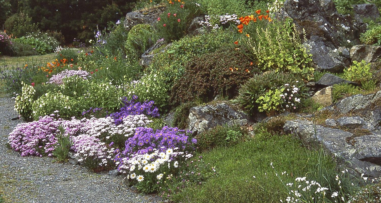 Фото цветов для альпийской горки с названиями