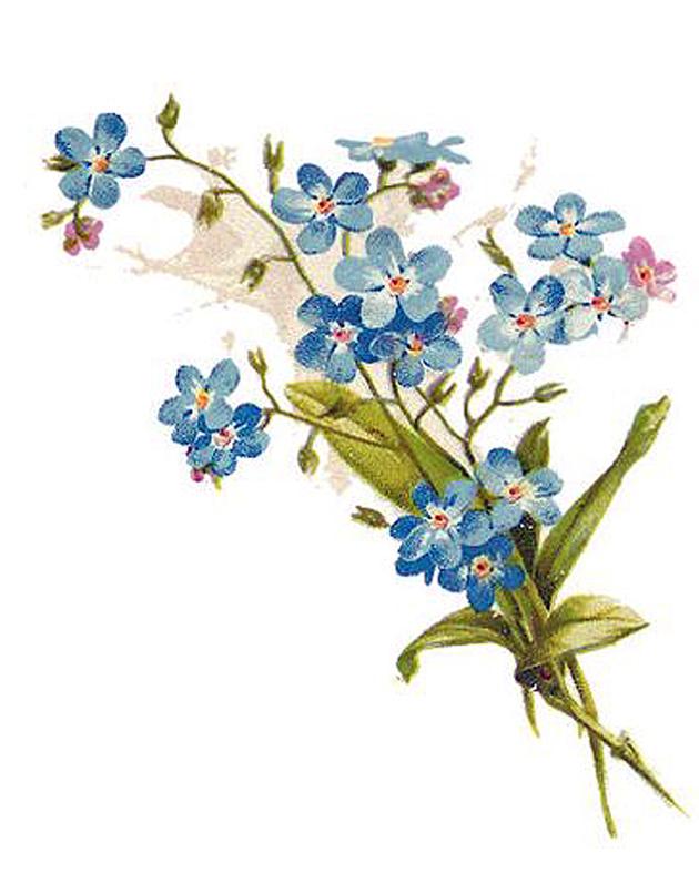 Картинки незабудки цветы нарисованные, посмотреть открытка лет